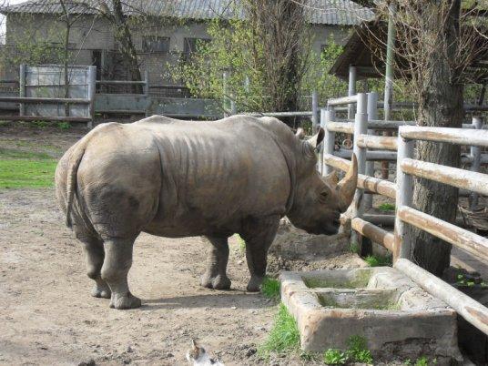 Носорог в Ростовском зоопарке