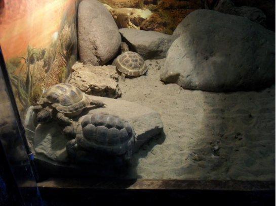 Черепахи в ростовском зоопарке