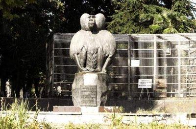 Обезьяний питомник в Сухуме