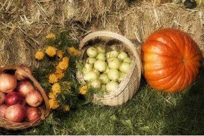 Осенняя уборка огорода